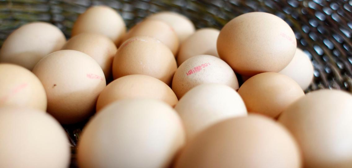 How egg shells become an energy store