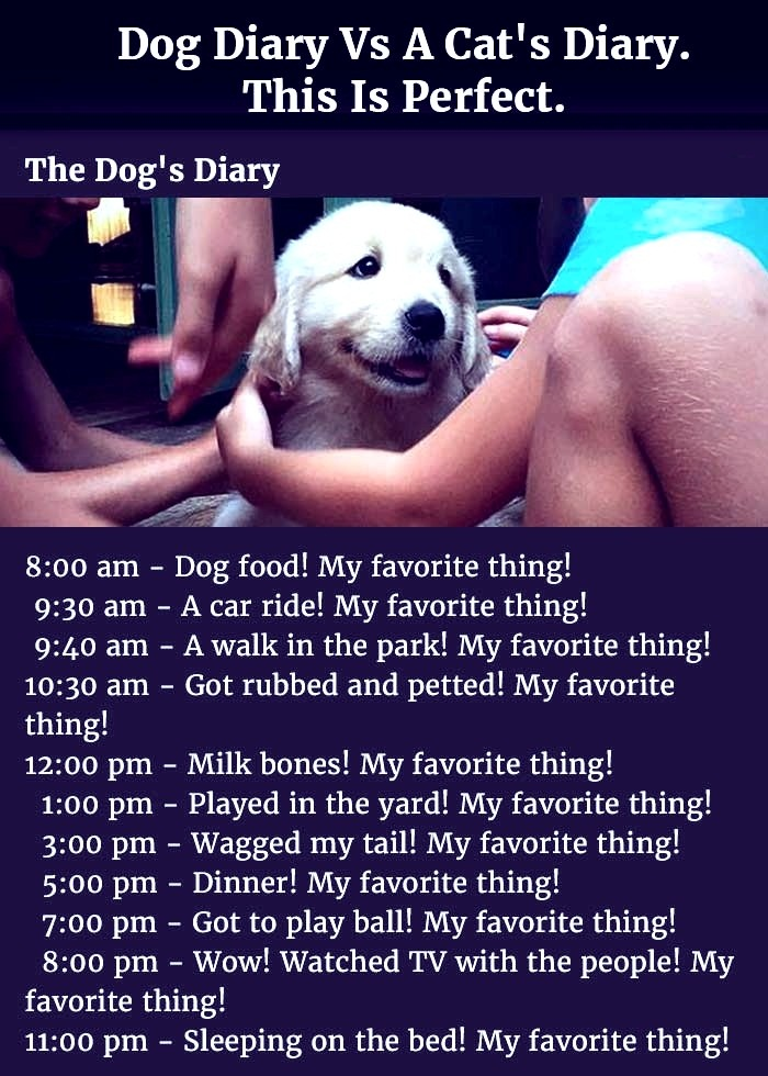 How the Life Of The Cat And Dog Goes As A Pet.
